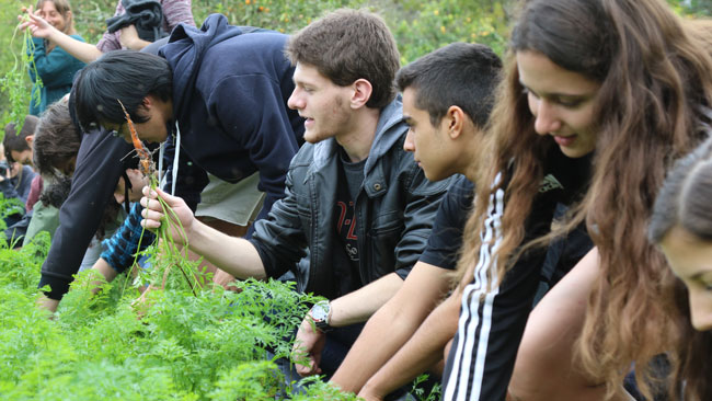 Students pick carrots before washing them off to eat at the direction of Sundew Garden's Tom Carrey.
