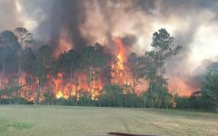 The Sterling Creek fire burns through vegetation close to Live Oak Reserve. The blaze was contained at 2 a.m.  the next morning.