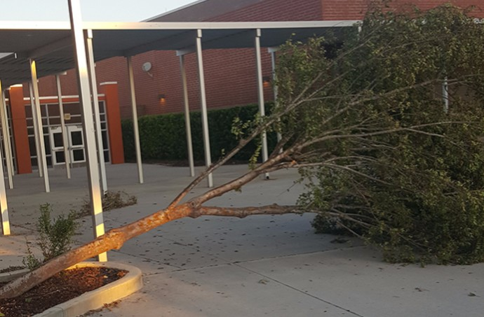 Hurricane+Irma+toppled+three+trees+on+campus%2C+including+one+near+the+main+entrance+of+the+school.+The+fallen+trees+were+removed+before+classes+resumed.