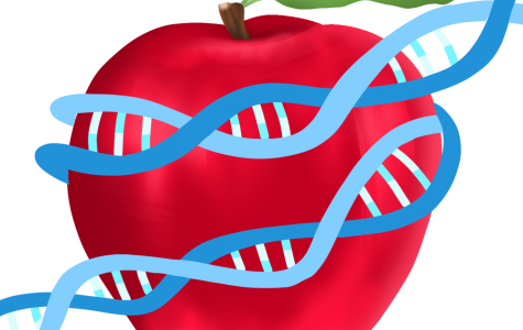Bioengineers have learned to genetically modify organisms in order to create a better crop with higher yields.