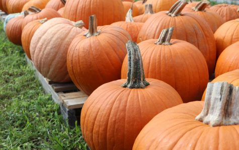 Sponsored by the girl's laccrose team, the annual pumpkin patch went up early this fall. Carving pumpkins is a great alternative to trick-or-treating, which has been discouraged this year due to coronavirus.