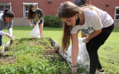 Freshman Sydney Schmidt weeds the plant boxes. The Environmental Club met on Sept. 1 to begin cleaning up the school garden.