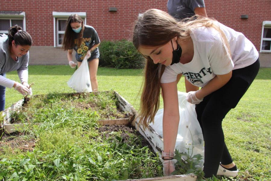 Freshman+Sydney+Schmidt+weeds+the+plant+boxes.+The+Environmental+Club+met+on+Sept.+1+to+begin+cleaning+up+the+school+garden.